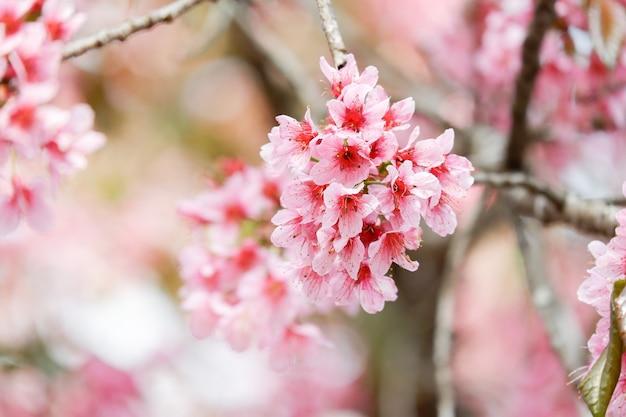 Розовый веселый цветок