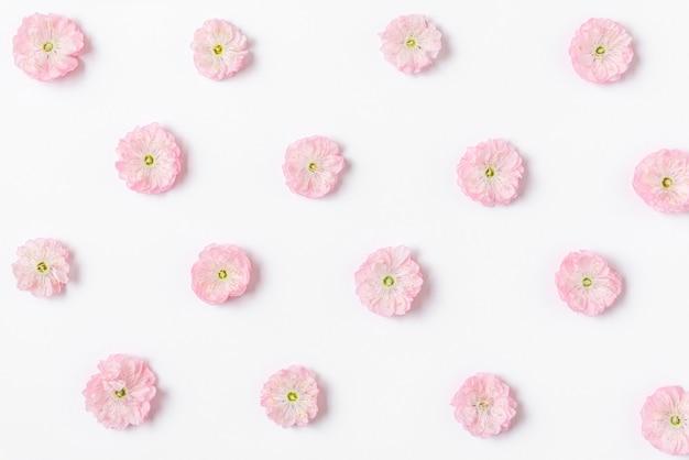 ピンクの桜の花のパターンは、白い背景で隔離。フラットレイ。上面図。バレンタインデーのコンセプト。花柄