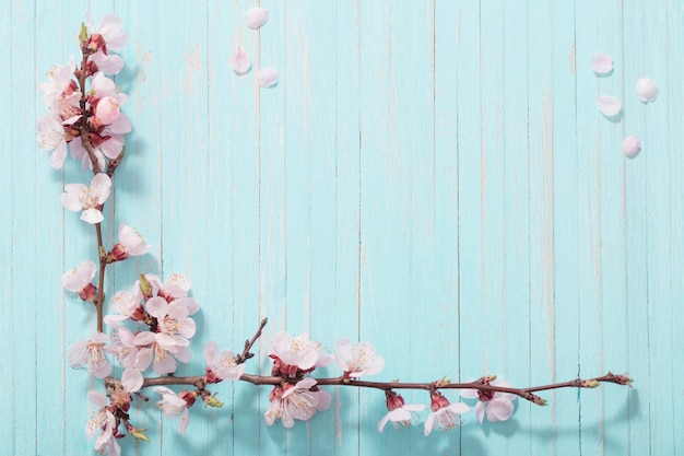 Pink cherry flowers on blue background