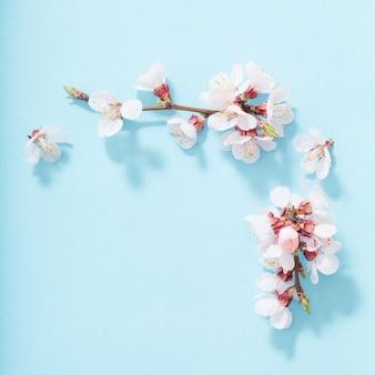Розовые цветы вишни на синем фоне