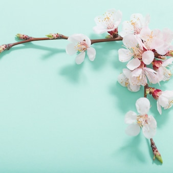 Розовые вишневые цветы на зеленом фоне