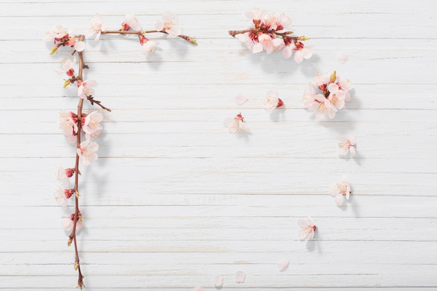 Pink cherry flowers on white wooden background