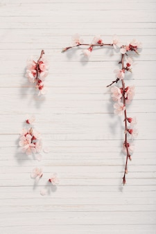 Pink cherry flowers on wooden background