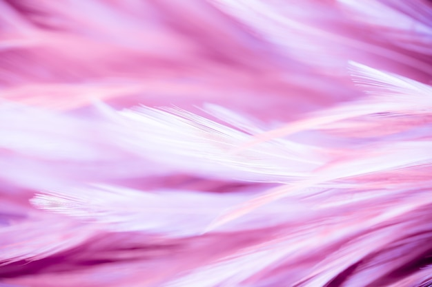 Pink chicken feathers in soft and blur style for the background. bird
