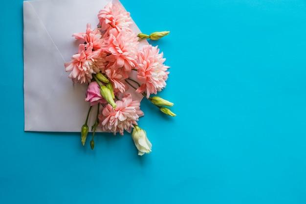 Pink chrysanthemum flowers and ranunculus flowersenvelope on blue wall.