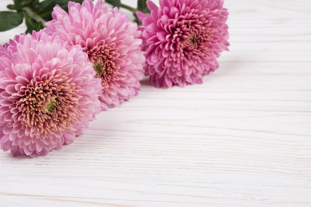 Pink chrysanthemum flowers on a white wooden
