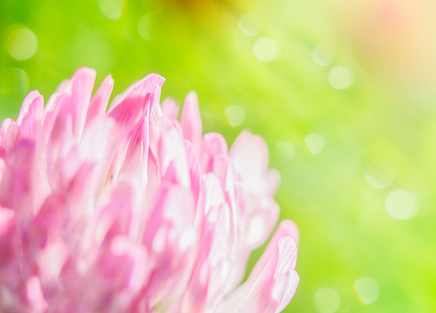 ボケとコピースペースで焦点がぼけた薄緑色の背景にピンクのクローバーの花