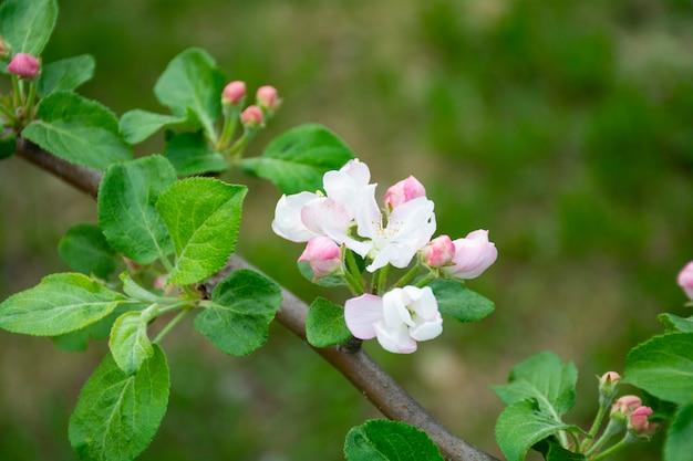 Розовый цвет с зелеными листьями