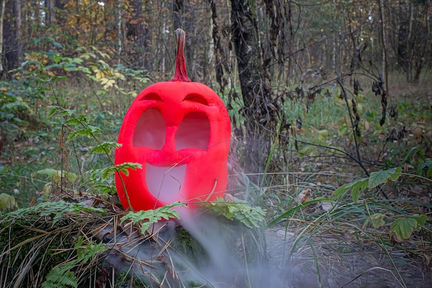Pink colored halloween pumpkin in autumn forest on old stump jack lantern with steam from mouth