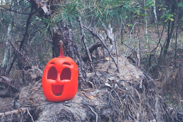 Pink colored halloween pumpkin in the autumn forest on an old stump