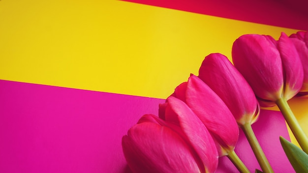 Pink colorful tulips over a colorful background, in a flat lay composition with copy space