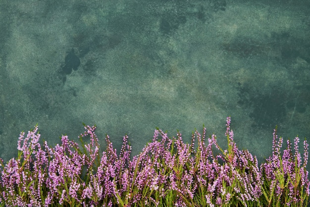緑の背景にピンクのコモンヘザーの花。