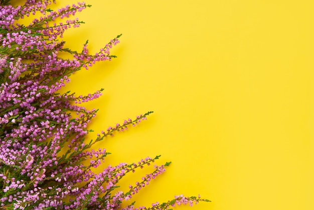 Pink common heather flowers on yellow background.