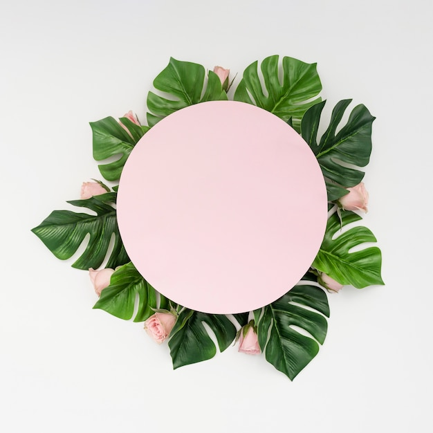Pink copy space surrounded by monstera leaves