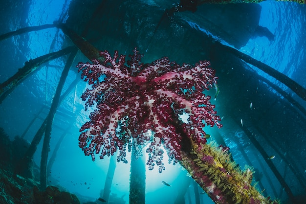 港の下のピンクのサンゴ