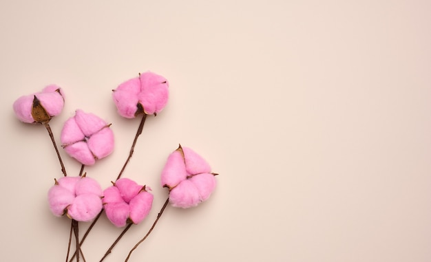 Pink cotton flower on pastel beige paper background, overhead. minimalism flat lay composition, copy space