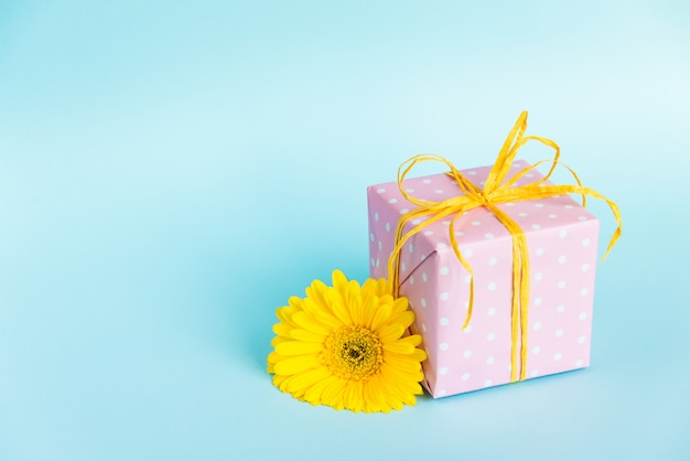 Pink dotted gift box and a yellow gerbera flower over blue.