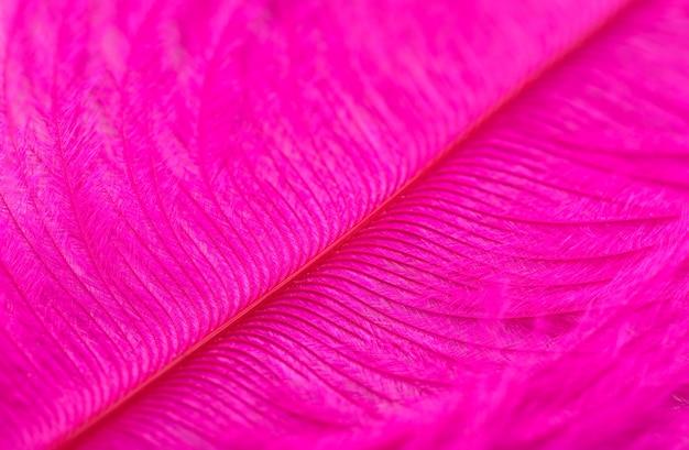 ピンク染めのダチョウの羽のクローズアップの背景