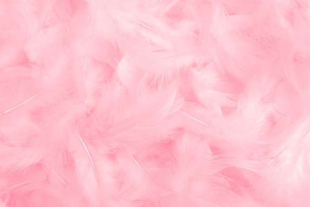 Pink feathers texture as background.