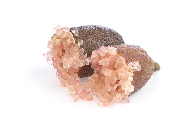 ピンクのフィンガーライム、白い背景で隔離の果物。