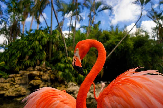 Pink flamingo against blurred green background in the national park.