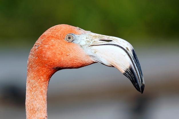 ピンクのフラミンゴの頭