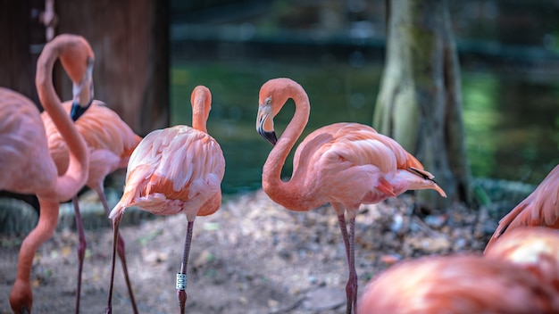 Pink flamingo wildlife