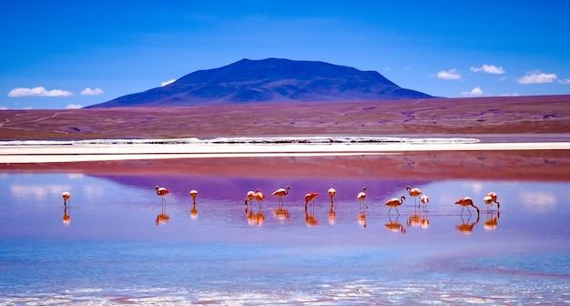 볼리비아의 흥미진진한 석호 풍경에서 핑크 플라밍고