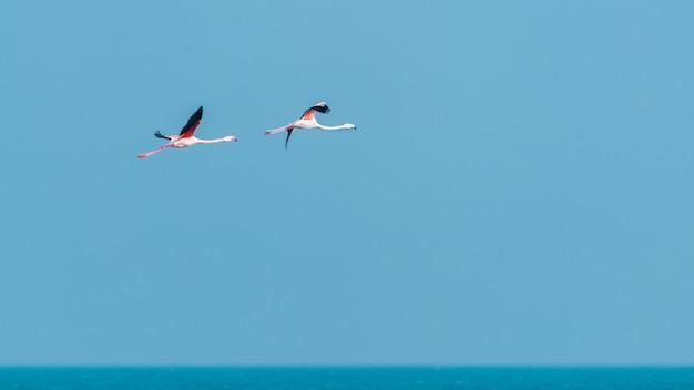 푸른 하늘에 비행에 핑크 플라밍고