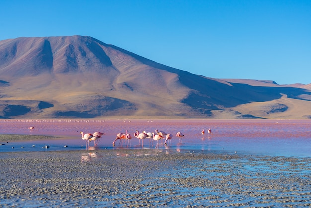 Pink flamingos at lake