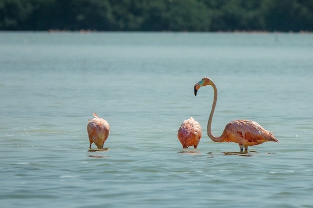 昼間に水中に立っているピンクのフラミンゴ