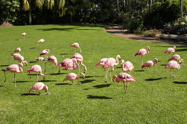 Pink flamingos on a summer day.