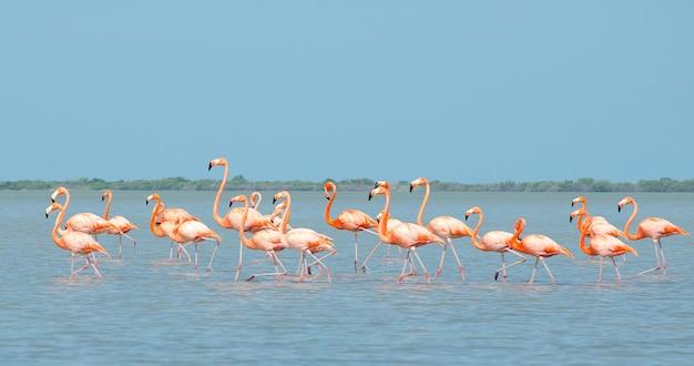 ラグーンを歩くピンクのフラミンゴ