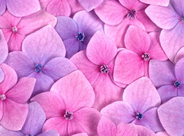 ピンクの花の背景をクローズアップ。ロマンチックで愛のパターン