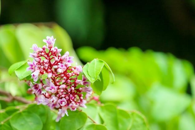 庭に咲くピンクの花と緑の葉をぼかし
