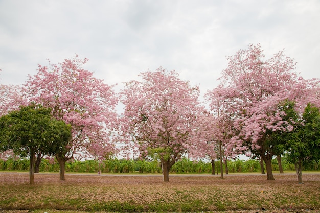 Pink flower blossom in the garden
