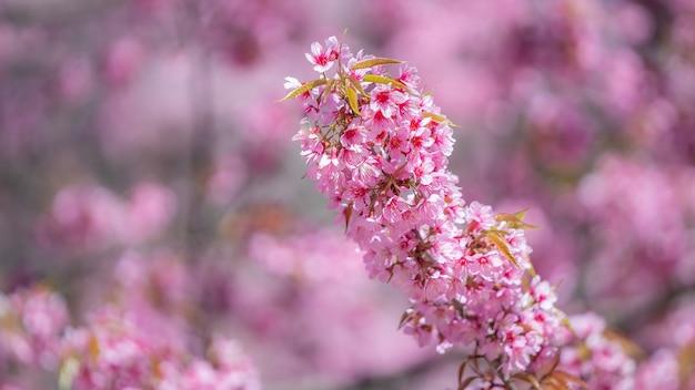 ピンクの花の枝