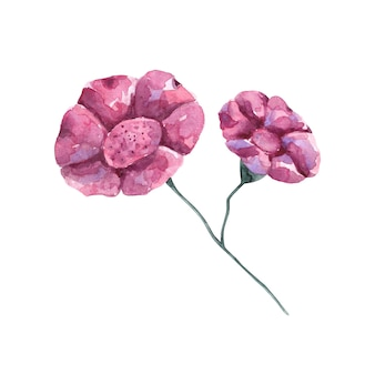 Розовый цветок клип арт ботанические иллюстрации на белом цветущий цветочный дизайн