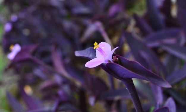 Fiore rosa vicino