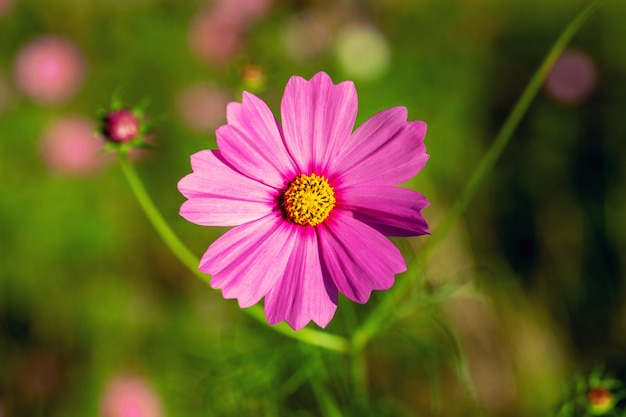 The pink flower on the day.