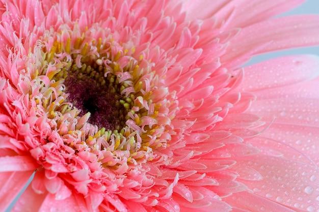 Pink flower delicate petals