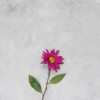 Pink flower on grey table