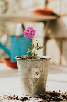 Розовый цветок в металлическом цветочном горшке