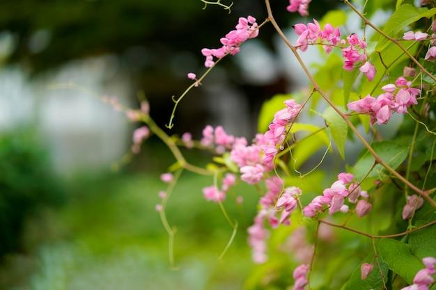 花の小さな蜂と朝のピンクの花ツタ