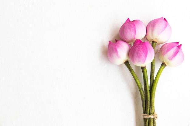 白地にピンクの花蓮 Premium写真