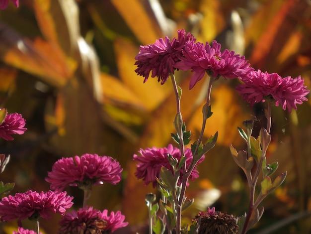 핑크 꽃 개체