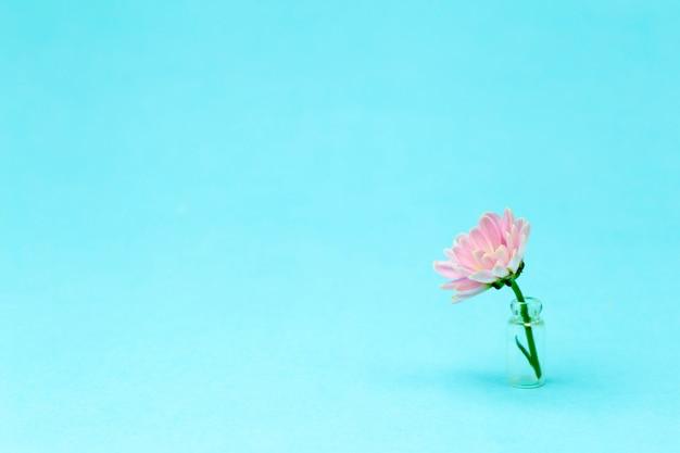 컬러 최소한의 배경에 핑크 꽃입니다. 꽃 배경 크리 에이 티브입니다. 공간 복사