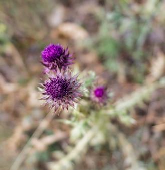 식물에 분홍색 꽃 고품질 사진