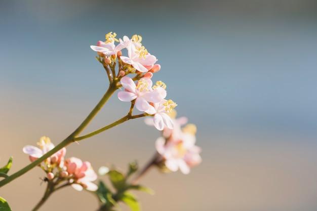 배경 흐리게 및 복사 공간에 핑크 꽃 삽입 텍스트. 프리미엄 사진