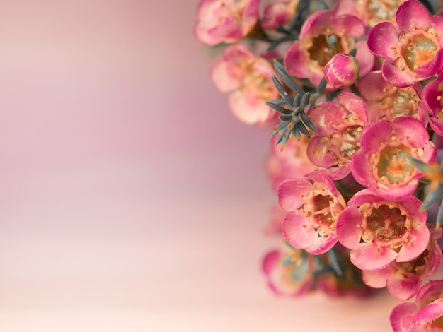 Розовый цветок на размытом фоне с красивым боке, специально подчеркивающий красоту цветка